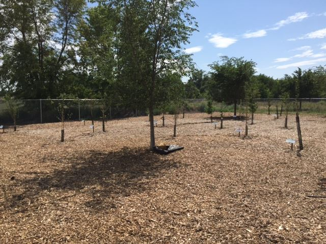 COMMUNITY ORCHARD PHOTO